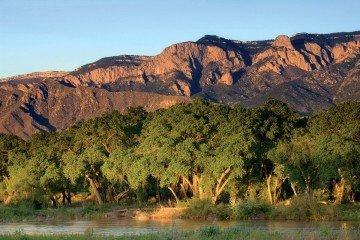 Bosque del Rio Grande 7