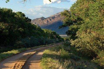 Bosque del Rio Grande 9
